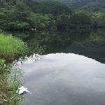 昭和池での夏のヒットパターン